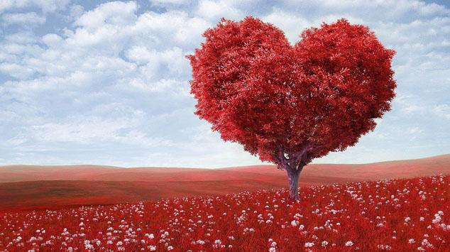 heart health tree - boomer health center